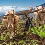 Teren rolniczy