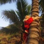 Może po kokosy się wspina
