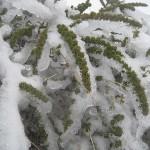 Zima na szczycie La Palma