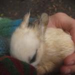 Mój króliczek.