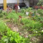 Ogród wegetarian