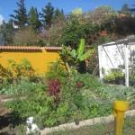 Inna część ogrodu