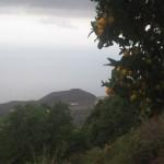 Sezon na pomarańcze
