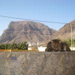 Zchilloutowana atmosfera Valle Gran Rey
