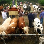 Fiesta Feria de Ganado w San Isidro