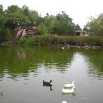 La Laguna de Barlovento