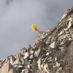 Roślinność górska