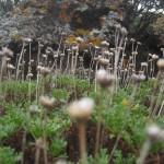 Przybrzeżna roślinność