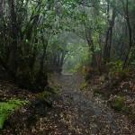 Las wawrzynowy Los Tiles