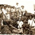 Breña Baja, 1950, przygotowywanie tarasów pod uprawę bananów