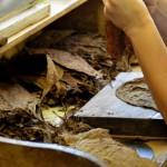 Ręcznie robione cygara z La Palmy, fot. Karolina Bazydło