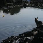 Aport wodny